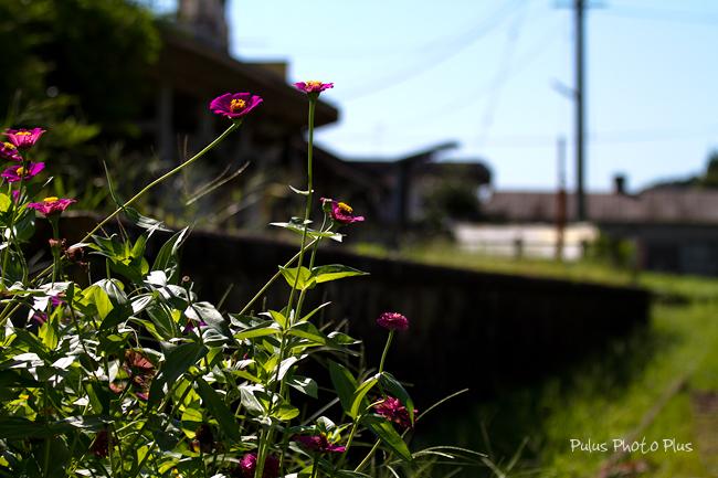 西中金駅ホームと花-(1---1).jpg